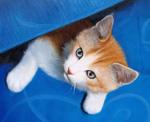 猫のペット肖像画